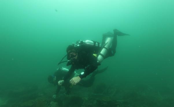 Mandarin Divers photo 5