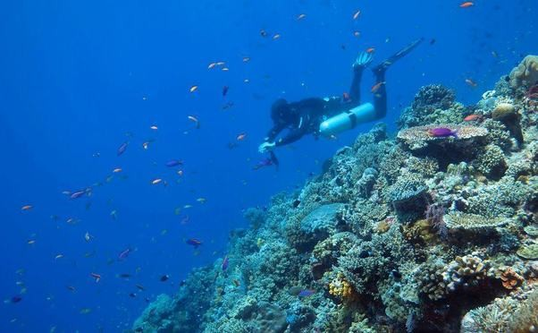 Mandarin Divers photo 3