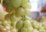Autumn Grape Festival by Dante Alighieri Society - Hong Kong