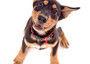 Pet Portraits by Arbiser Photography