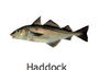 Haddock by Wild C Limited