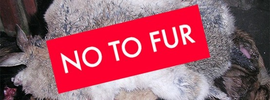 150306-localiiz-readers-say-no-to-fur-no-to-fur-feature-660x330-660x330_wide_box