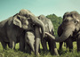 Saving Our Elephants: Hong Kong's philanthropic leaders gather to prevent extinction.